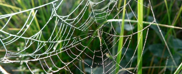 dew-covered-spider-web