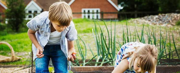Boy And Girl Standing By A Vegetable Bed In A Gard KHEGFJ2